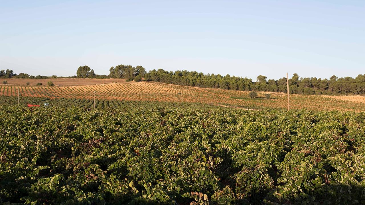 Powody, by sprzedać winiarnię