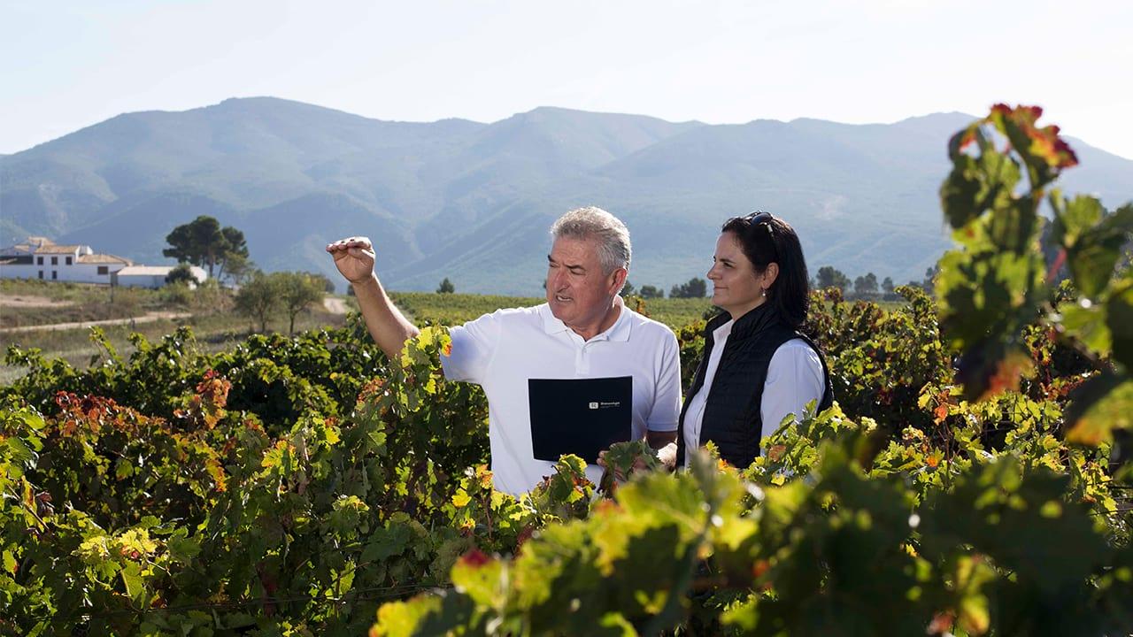 Droga ku sprzedaży winiarni