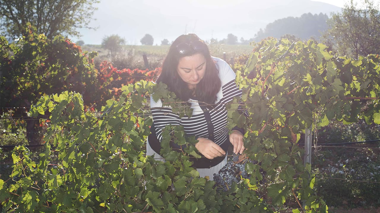 Why Buy a Winery with Rimontgó?