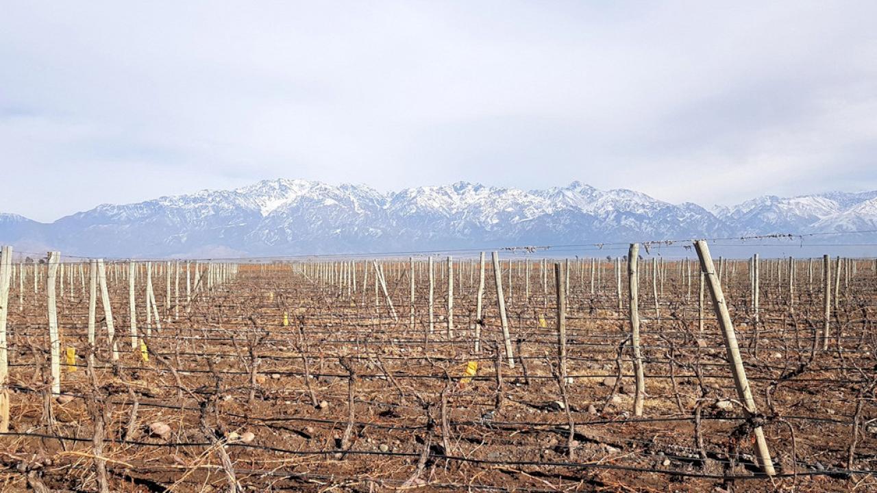 Bodega en Mendoza Este en venta.