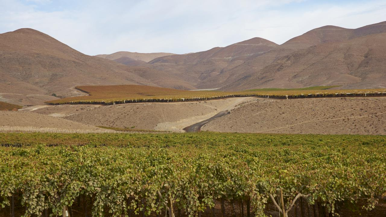 Vineyards for sale in Copiapó, Chile.